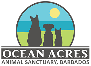 Ocean Acres Animal Sanctuary, Barbados