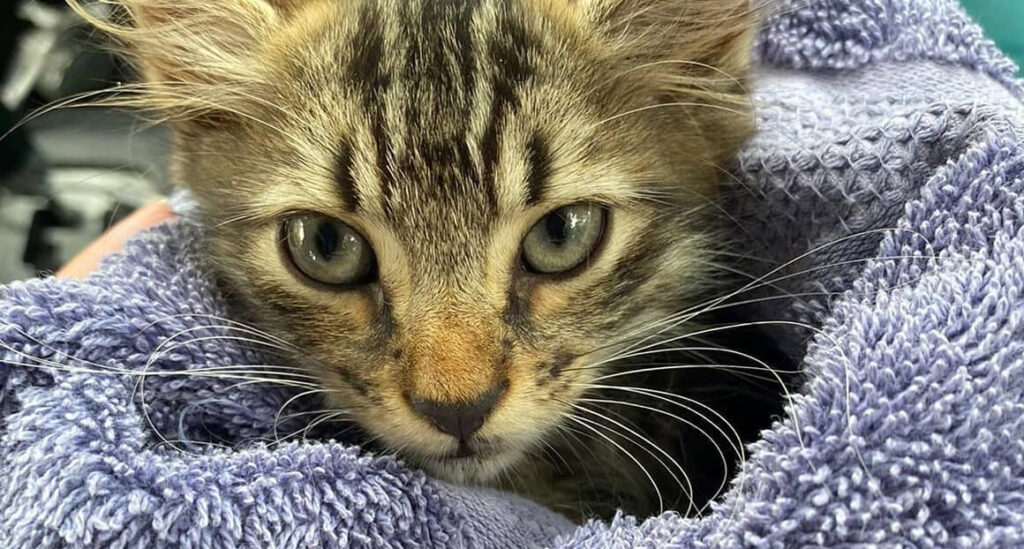 cats and kittens for adoption