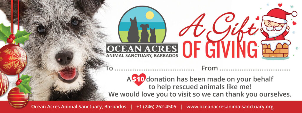 Ocean Acres Christmas Gift Voucher - Rescue Dog