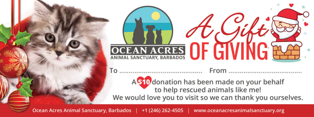 Ocean Acres Christmas Gift Voucher - Rescue Kitten