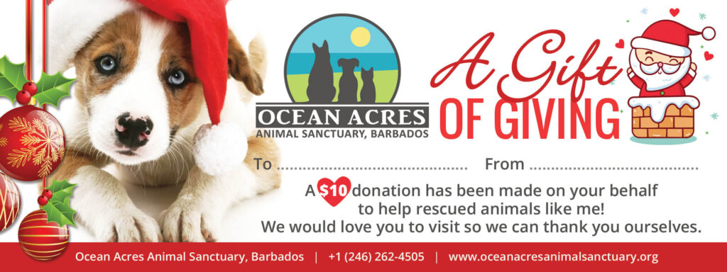 Ocean Acres Christmas Gift Voucher - Rescue Puppy
