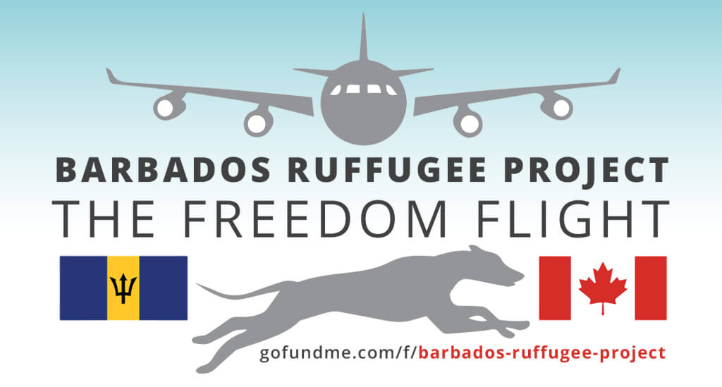 Barbados Ruffugee Project