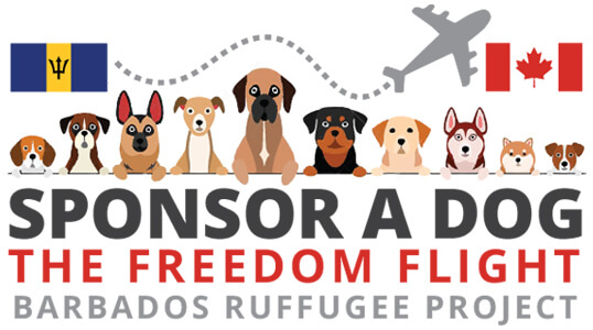 sponsor a dog, the Freedom Flight, Barbados